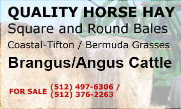 Quality Horse Hay, Tifton / Bermuda Grasses, & Brangus Cattle